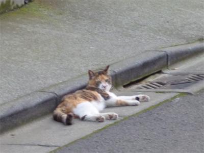 cat07031.jpg