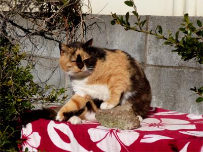 cat7.jpg