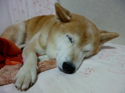 suzu1001.jpg